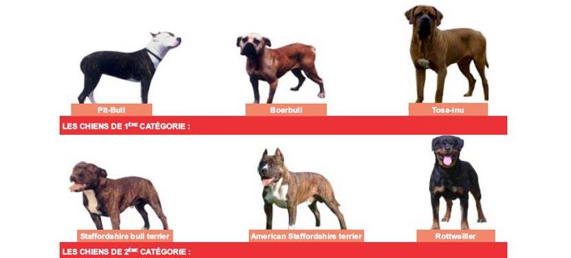 photos des chiens dangereux